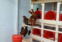 Coteț găini