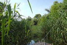 Tisza tó / Európa legnagyobb mesterséges tava, ahol az idők folyamán és a madarak nyomán, olyan természet alakult ki, melyen döbbenetes hasonlóságot találunk a világ nagy folyamai között. www.tavitura.hu