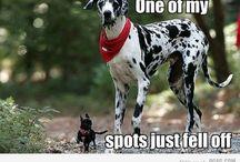 Funny stuff..... / by Lori Klasinski