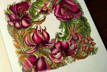 Daphne colours