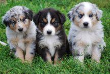 puppies / by Jessica Zacharias