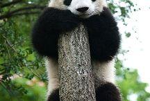 pandas /