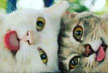 cats & animals