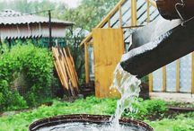 harvesting rain water