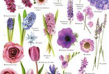 Цветы подборки