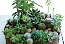 Plantas,flores e jardim