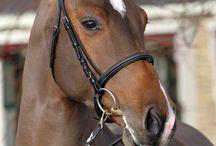 Kwpn paarden / Love horses