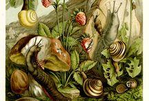 paintings nature,landscape