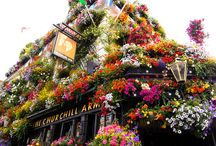 Englantilainen pubi...