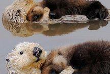 otters / by Patti Lounibos