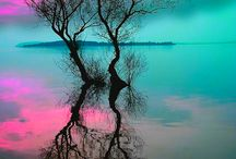 colour of live