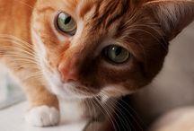 cats / by Brenda Bailey