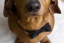 Doxie dogs & pals 2 cute 4 words / Wiener living is the best! / by Real Tree Girl