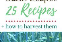 Recipes From The Garden / All homemade recipes from the garden.  #gardenrecipes #homemade #recipesfromthegarden #vegetablerecipes