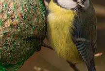 Terra Morchellarum : Oiseaux - Birds