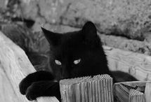 Black Mistery Cat