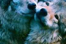 Myne / Wolfs, Tattoos, Animals and stuff