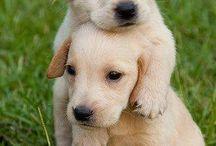 dogs ❤❤ / son súper cuquis