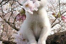 Белые кошки и котята / Самые белые и красивые кошки и котята со всего pinterest com.
