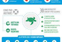 Infografiche / Approfondire i temi della natura