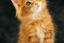Cats I want !