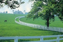 Kentucky / by Laura Denney-Lawson