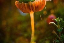příroda / rostliny, houby, stromy, krajina