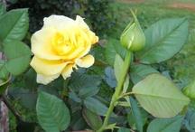 Flowers / by Barbara Parkinson