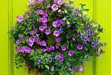 Garden/plants/outdoors