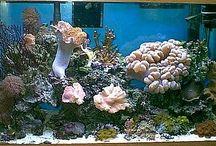 Fish tanks / by Erica Pas'k
