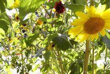 arco d gira sol e flores