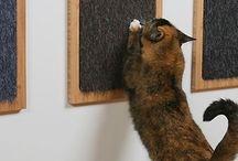 dexter e maya / Ideias para deixar mais divertida a vida dos meus gatos.
