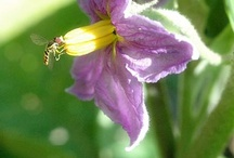 feral blossoms / flowers in my garden / by feral gardener