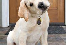 puppy s