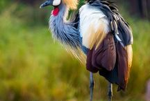 Valokuva, linnut