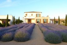 Lavender Fields / Different faces of the lavender field, from the strict and formal to the relaxed meadow