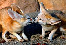 szerelmes állatok