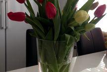 Omat kukat / Omia ja muiden istutuksia. Luonnonkukkia.