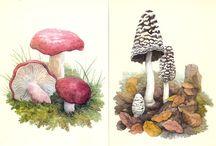 Фрукты, овощи, грибы
