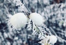Talviset pihat - winter gardens