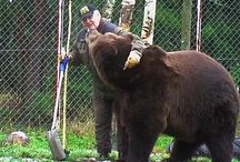 Sulo ja karhut