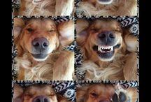 SELFIES DOGS & PETS
