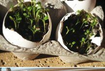 ciekawostki dla domu i ogrodu