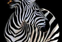 Fauna - чёрно-белое