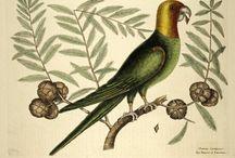 alte Illustrationen und Naturzeichnungen