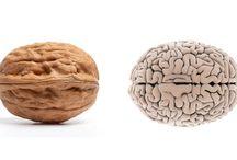 Brain food / Good food for feeding your brain