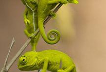 Animals / by PierWalker ...