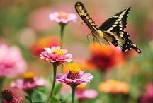 Vogels en insecten in de tuin - inspiratie