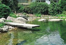 Pond Hints, Tips & Guides / Hints, Tips and Guides to help you get the most out of your garden pond