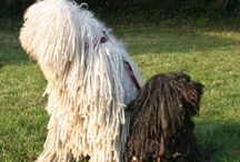 magyar kutyák